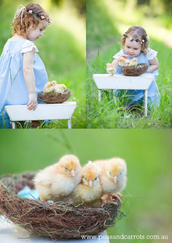 Brisbane Childrens Photography, Photographer Nikki Joyner for Peas & Carrots Photography captures whimsical and unique images of childhood moments, colourful and fun photographs.  Miss Eden with her baby chickens just one day old and freshly hatched from t