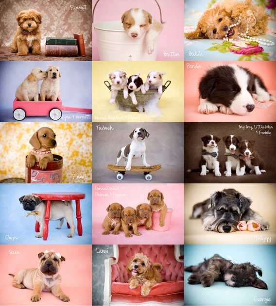 Brisbane Puppy Photography ~ Furry friends by Peas & Carrots Photography.  Brisbane Baby Children Family and Animal Photographer Nikki Joyner of Peas & Carrots Photography AIPP Accredited Professional Photographer.  Nikki is well known around Brisbane, Sa
