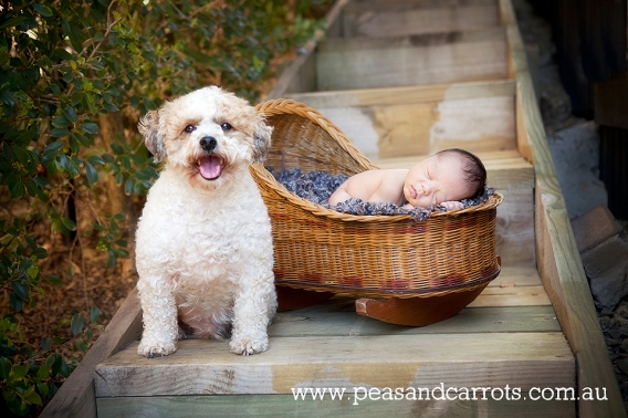 Brisbane Baby Photography.  Dayboro Baby Photography.  Samford Baby Photography.  Brisbane Child Photography.  Childrens Photographer Brisbane Dayboro Samford whimsical images of children and animals at play, girl and her pet guinea pig.  Brisbane Children