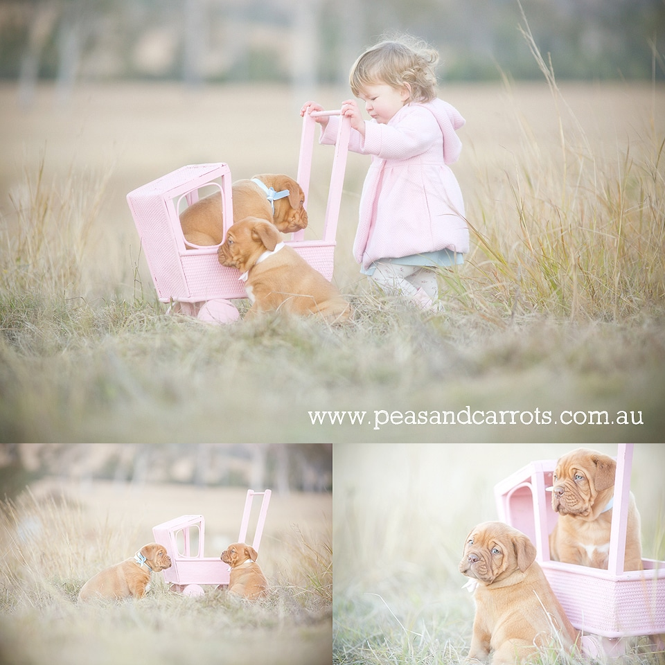 Brisbane Baby; Children & Family Portrait Photography ~ Peas & Carrots Photography.; Award winning children